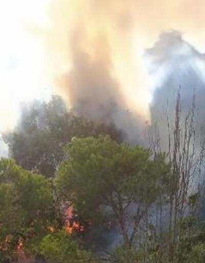 Üsküdar'da ormanda yangını
