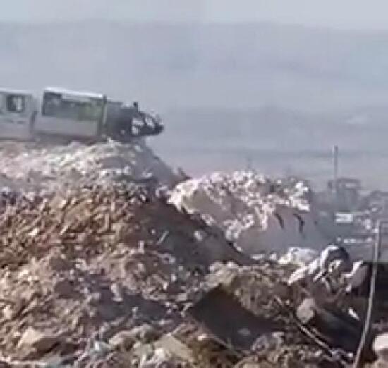 Ölü köpeklerin çöpe atıldığı görüntüler tepki topladı