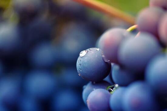 Mevsim geçişlerinde zayıflayan bağışıklığı zirveye çıkaracak besinler!