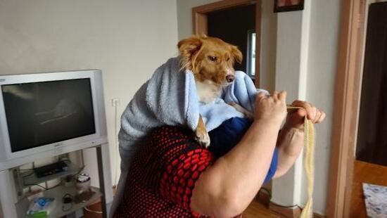 Sahiplendiği köpeği sırtında taşıyor