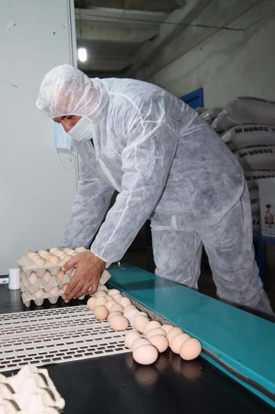 Üreticilerden 'gezen tavuk yumurtası' uyarısı