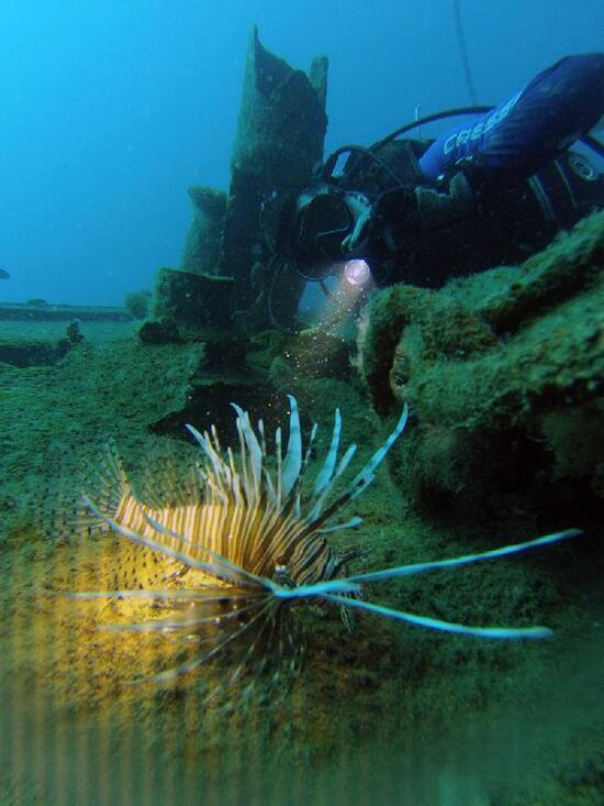 Akdeniz'de aslan balığı sürüsü görüntülendi