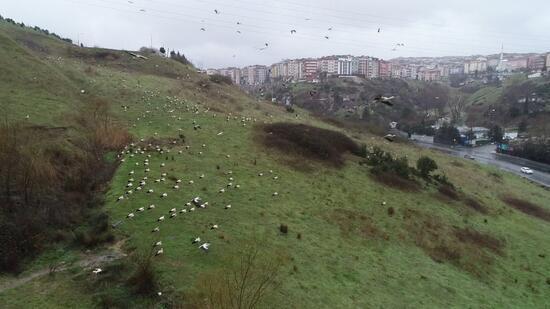 İstanbul'u leylekler bastı