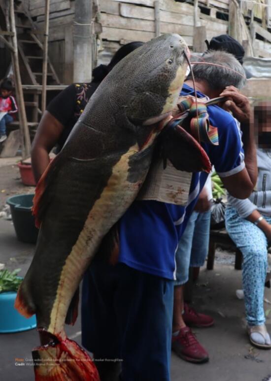 Bir sonraki salgın buradan çıkabilir: 200'den fazla türün Peru'da yasadışı olarak satıldığı ortaya çıktı