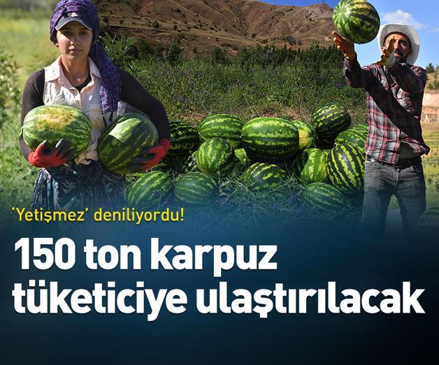 Son dakika: 'Yetişmez' denilen Sivas'ta, 150 ton karpuz hasadı