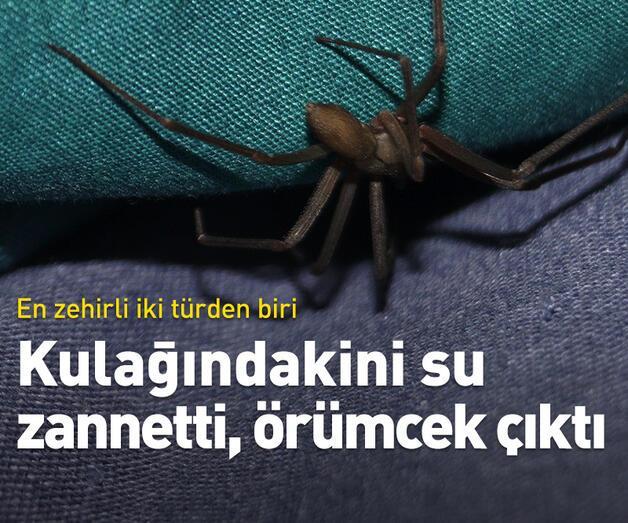 Son dakika: Kulağındakini su zannetti, örümcek çıktı