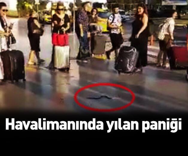 Son dakika: Havalimanında yılan paniği