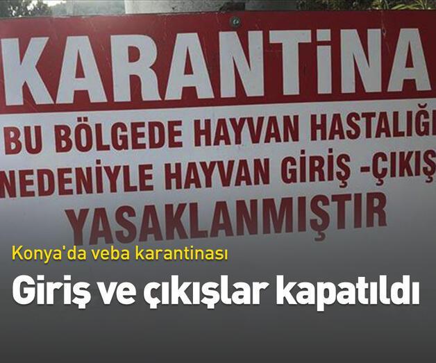 Son dakika: Konya'da veba karantinası