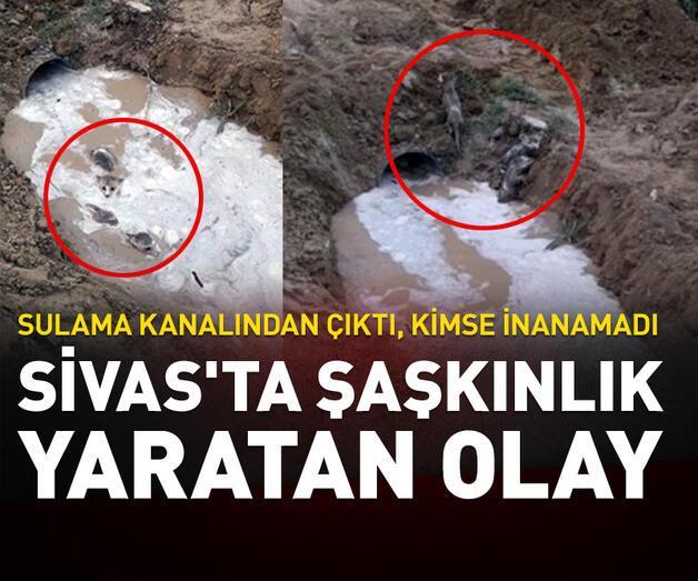 Son dakika: Sivas'ta şaşkınlık yaratan olay