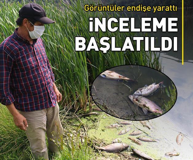 Son dakika: Toplu balık ölümleri sonrası inceleme başlatıldı