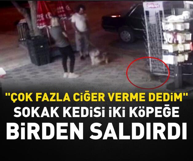 Son dakika: Sokak kedisi iki köpeğe birden saldırdı