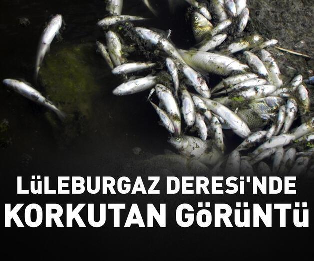 Son dakika: Lüleburgaz Deresi'nde korkutan balık ölümleri