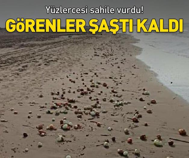 Son dakika: Yüzlercesi sahile vurdu! Görenler şaştı kaldı