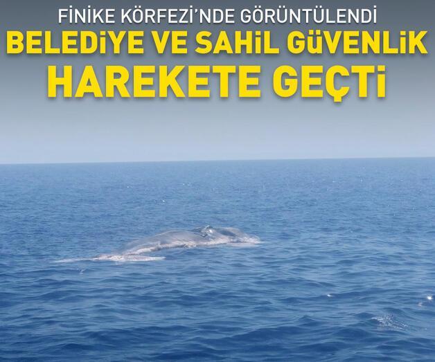 Son dakika: Son dakika... Finike Körfezi'nde ölü balina görüntülendi