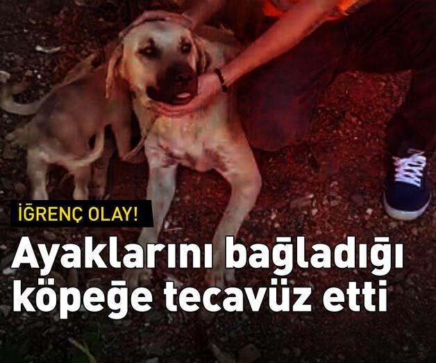 Son dakika: Ayaklarını hortumla bağladığı köpeğe tecavüz etti