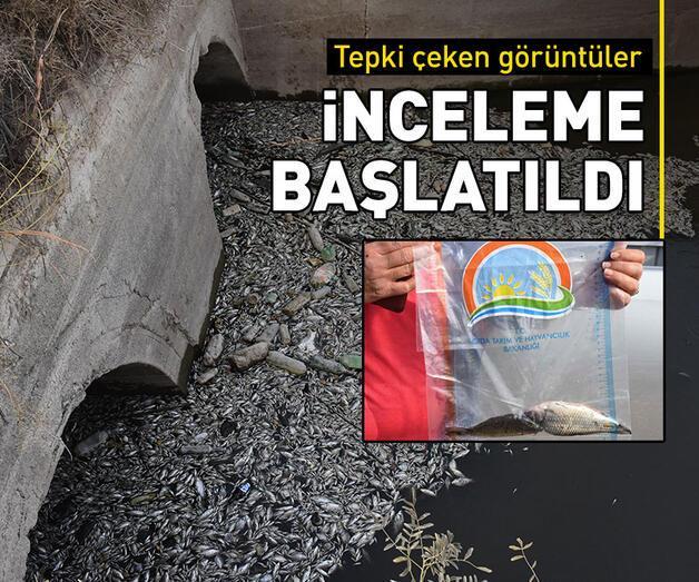 Son dakika: Aydın'da sulama kanalındaki toplu balık ölümlerine ilişkin inceleme