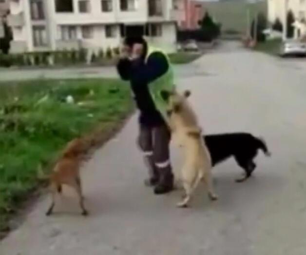 Son dakika: Belediye işçisinin köpeklerle oyunu yürekleri ısıttı
