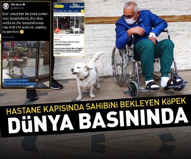 Son dakika: Sahibini hastane kapısında bekleyen köpek dünya basınında