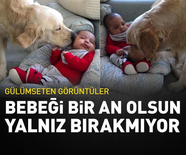 Son dakika: Köpek yeni doğan bebeği kimseyle paylaşmıyor
