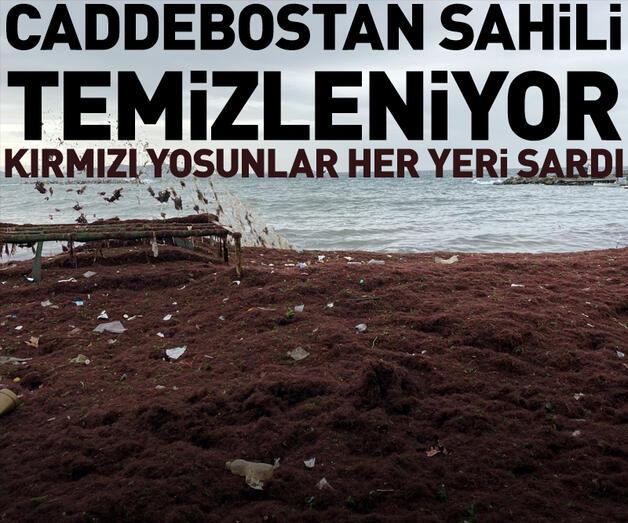 Son dakika: Caddebostan Sahili'ni saran kırmızı yosunlar temizleniyor