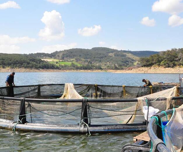 Son dakika: Denizi olmayan kentten dünyaya balık ihracı