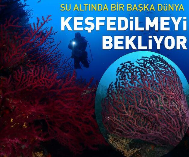 Son dakika: Ayvalık'ın kırmızı mercanları keşfedilmeyi bekliyor