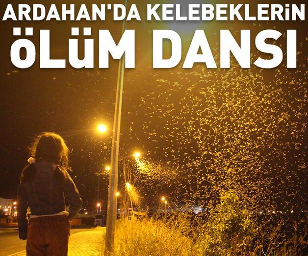 Son dakika: Ardahan'da kelebeklerin 'ölüm dansı'