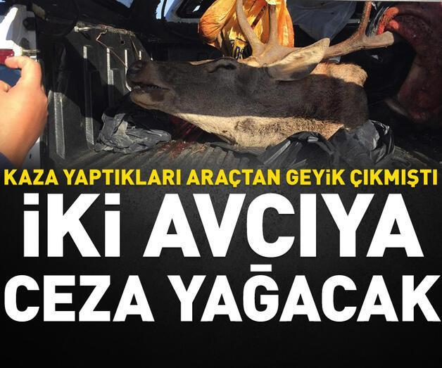Son dakika: Kaza yaptıkları araçtan geyik çıkan 2 avcıya ceza yağacak