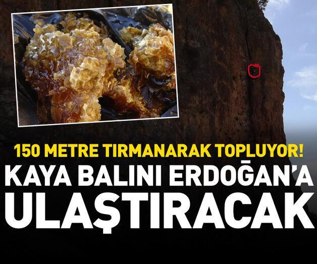 Son dakika: Kaya balını Cumhurbaşkanı Erdoğan'a ulaştıracak