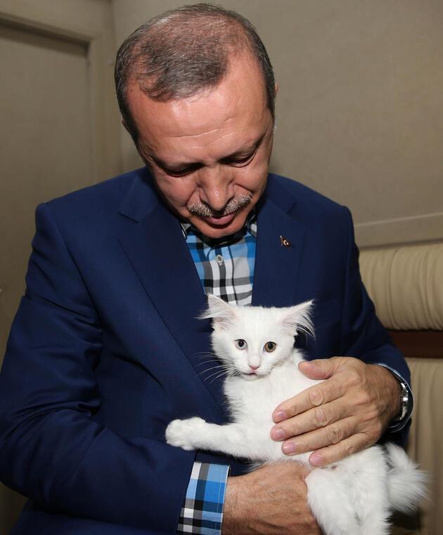 Başbakan Erdoğan, Van kedisini sevdi
