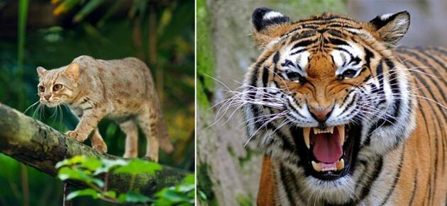 Hayvanlar aleminin türleri aynı ama boyutları farklı üyeleri