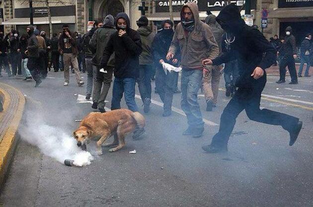 Yunanistan'da eylemlerin sembolü olan Loukanikos öldü