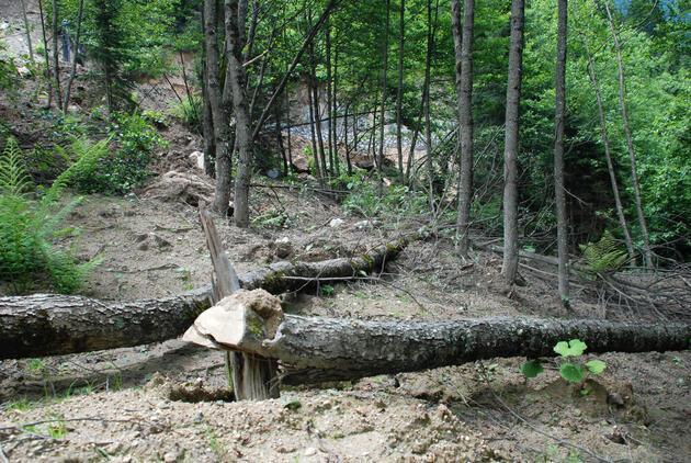 """Rize valisi """"tek ağaç kesilmedi"""" dedi ama katliam ortaya çıktı!"""