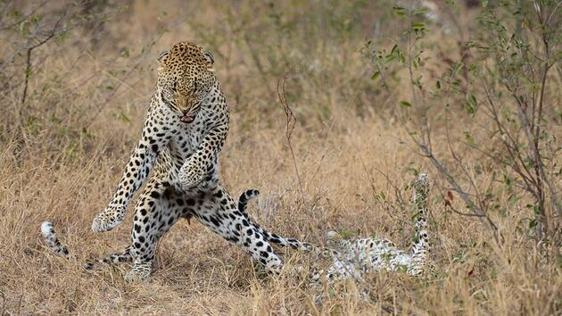 Hayvanların insanlardan daha komik olabileceğinin 30 fotoğraflı kanıtı!