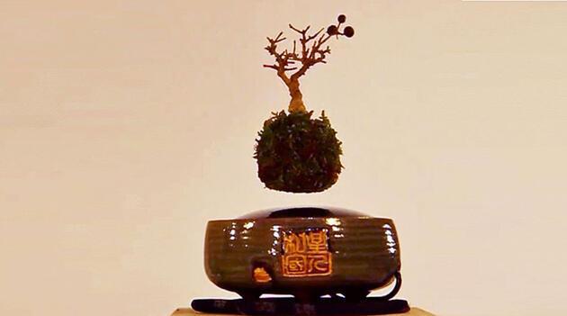 Japonlar uçan bonsai ağacı yaptı!