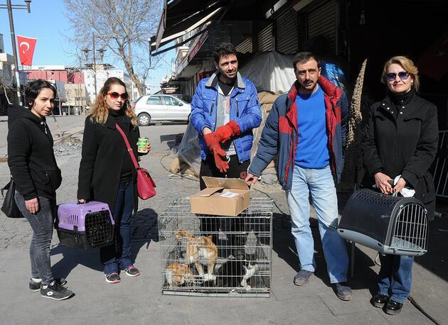 Sur'daki sokak hayvanlarını HAYTAP üyeleri kurtardı