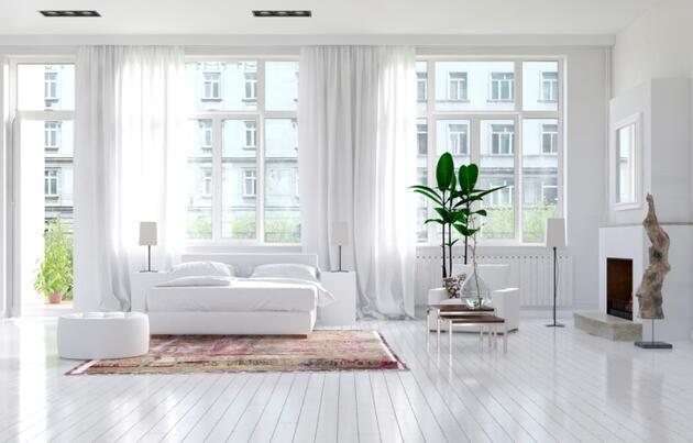 Evinizdeki havayı temizleyen 3 bitki