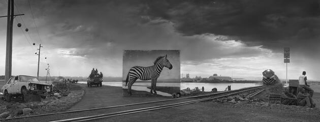 Burada bir zamanlar bir zebra yaşardı