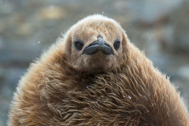 Vahşi doğadan ödüllü fotoğraflar