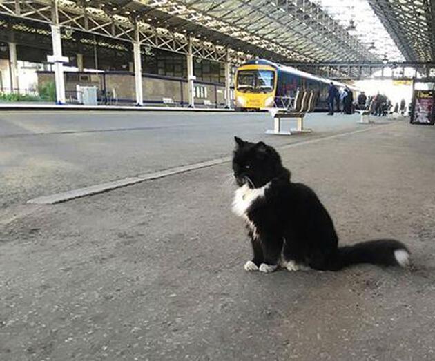 Kıdemli tren garı çalışanı kedi