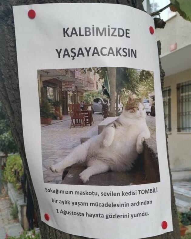Kadıköy'ün kedisi ''Tombili'' heykeli açıldı