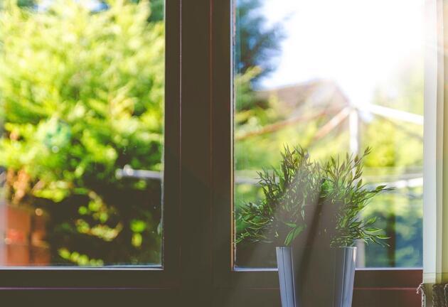 NASA öneriyor: Evin havasını bitkiler ile temizleyin
