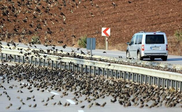 Soğuk kuşları da vurdu, binlercesi kara yolunu kapattı