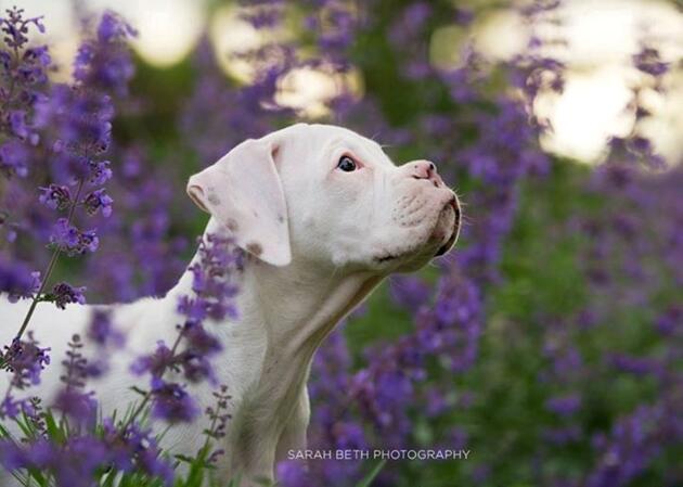 Dünyadaki en iyi 10 evcil hayvan fotoğrafçısı