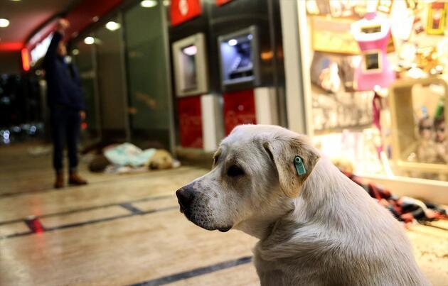 AVM girişi, sokak hayvanlarına barınak oldu