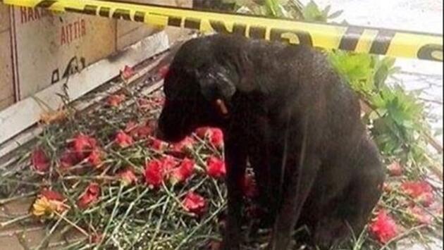 Fethi Sekin'in köpeği için kulübe koydular, yine de yerini bırakmadı