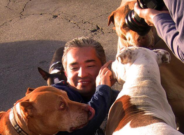 Köpek eğitimi için altın değerinde 12 tavsiye