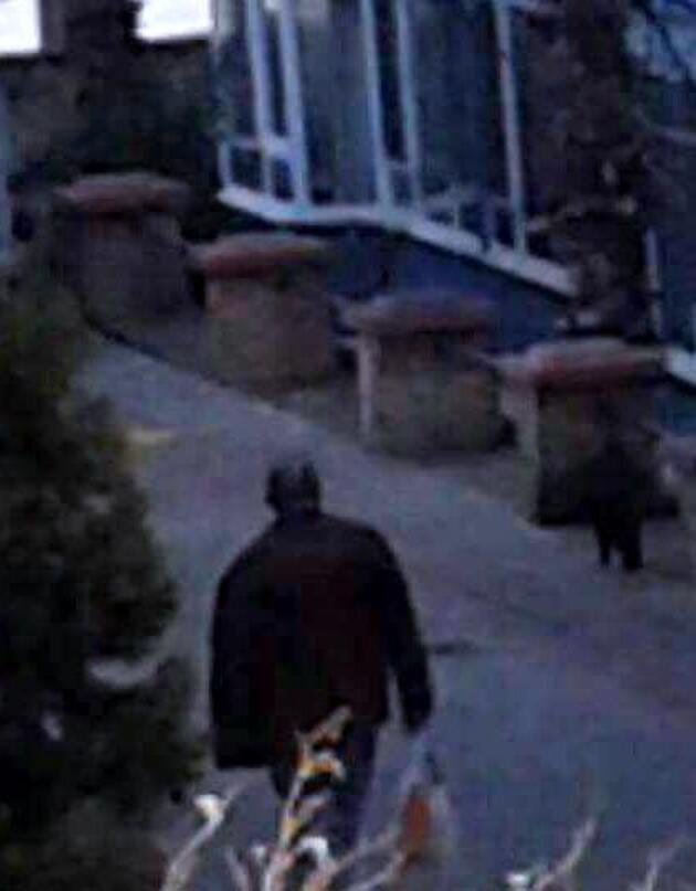 Kedi katliamında Rus uyruklu bir kişi gözaltında