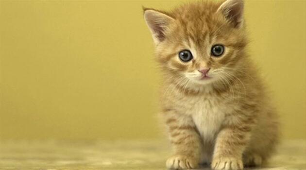 500 kedi yemek olmaktan son anda kurtarıldı