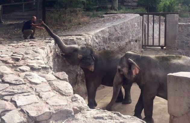 Arjantin'deki hayvanat bahçesinde fillerin yakarışı iç acıtıyor
